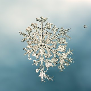Snowflakes Prints by Mike + Doug Starn Available Now