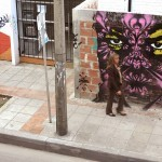 Stinkfish New Street Pieces – Bogota, Colombia