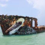 """""""Pelican"""" by Bordalo II in Aruba"""