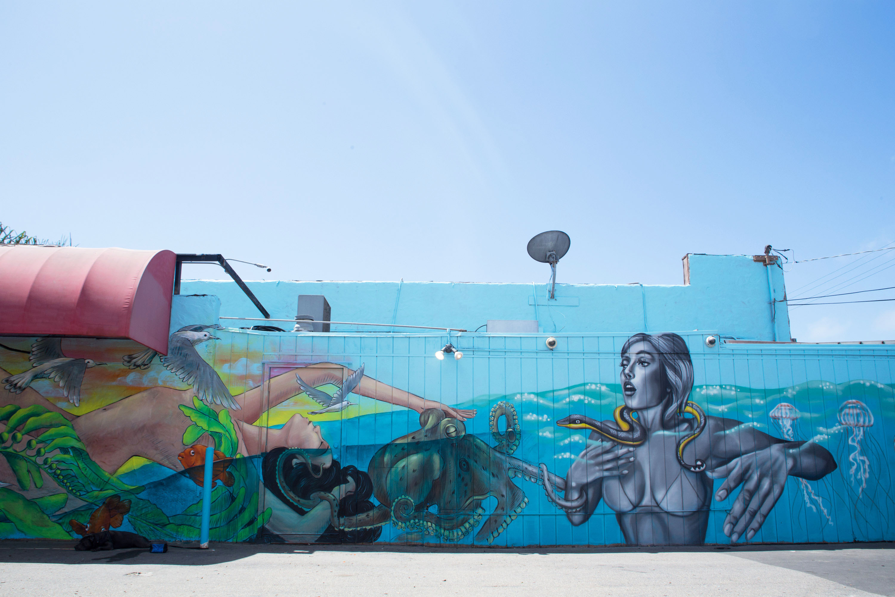 Pangeaseed Sea Walls Murals For Oceans San Diego 2016
