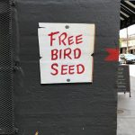 "E. LEE Entices Us With ""Free Bird Seed"" In Chicago"